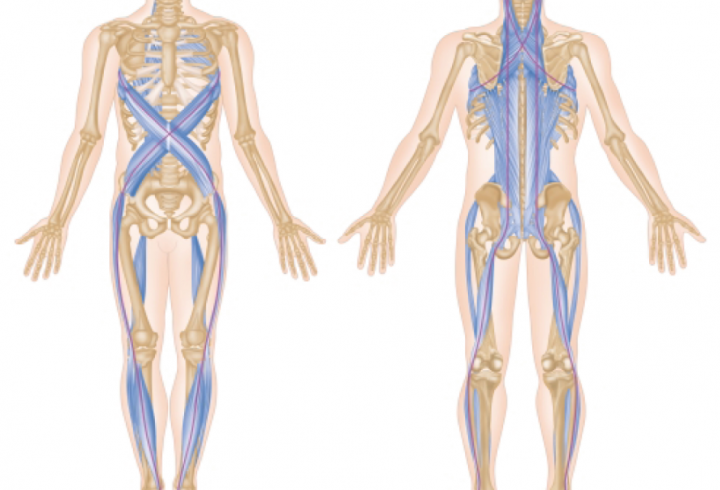 Anatomy Course & Pilates